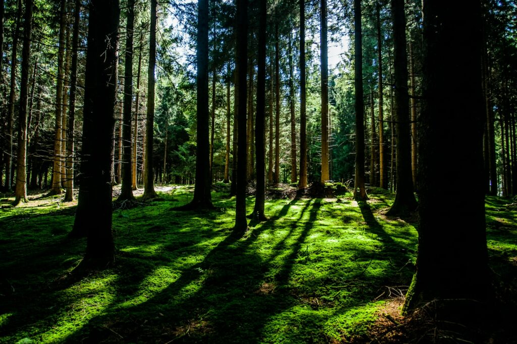 landscape photography of green forest